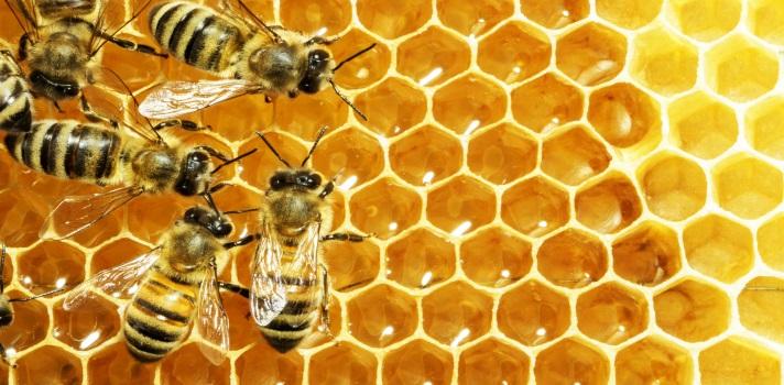 El trabajo de las abejas es fundamental para los ecosistemas