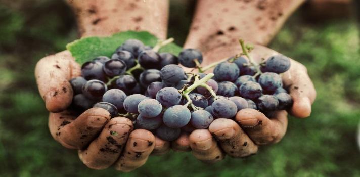 La industria del vino es cada vez más potente