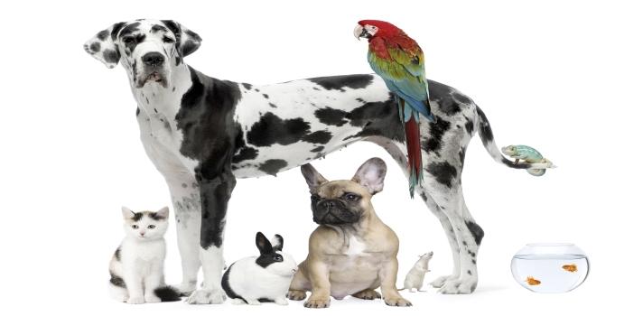 No te pierdas los cursos de veterinaria que ofrece la Universidad CES
