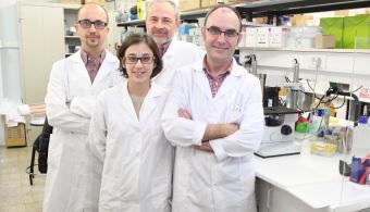 <p style=text-align: justify;>Cuatro investigadores del Instituto de Ciencias Biomédicas de la <strong><a href=https://www.universia.es/universidades/universidad-ceu-cardenal-herrera/in/10049>Universidad CEU Cardenal Herrera</a></strong>, Begoña Ballester, Enric Poch, Ignacio Pérez Roger y José Terrado, han sido premiados por su estudio sobre el papel de la proteína RhoE en la neurorregeneración del cerebro adulto. <strong>Este equipo, en colaboración con investigadores del CIPF, la <a href=https://www.universia.es/universidades/universitat-valencia/in/10018>Universitat de València</a>y el Centre de Regulació Genómica (CGR)</strong> de Barcelona, ha demostrado que, en ausencia de esta proteína, las células madre neuronales proliferan más en la zona subventricular, pero migran peor y presentan graves alteraciones en su diferenciación final. Esta investigación, recientemente publicada en la revista Brain Structure & Function, una de las más prestigiosas en las áreas de Neurociencias y Anatomía, ha recibido una mención de honor en los Premios Ángel Herrera a la Investigación en Ciencias Experimentales, entregados en Madrid el pasado 22 de enero.</p><p style=text-align: justify;></p><p style=text-align: justify;></p><p style=text-align: left;><strong>Lee también</strong><br/><a style=color: #ff0000; text-decoration: none; title=¿Cómo prevenir el desarrollo de enfermedades neurodegenerativas? href=https://noticias.universia.es/ciencia-nn-tt/not icia/2013/10/29/1059353/prevenir-desarrollo-enfermedades-neurodegenerativas.html>» <strong>¿Cómo prevenir el desarrollo de enfermedades neurodegenerativas? </strong></a><br/><a style=color: #ff0000; text-decoration: none; title=Descubren una nueva enferm edad neurodegenerativa infantil href=https://noticias.universia. es/ciencia-nn-tt/noticia/2013/04/10/1015654/descubren-nueva-enfermedad-neurodegenerativa-infantil.html>» <strong>Descubren una nueva enfermedad neurodegenerativa infantil </strong></a><br/><a style=color: #ff0000; te