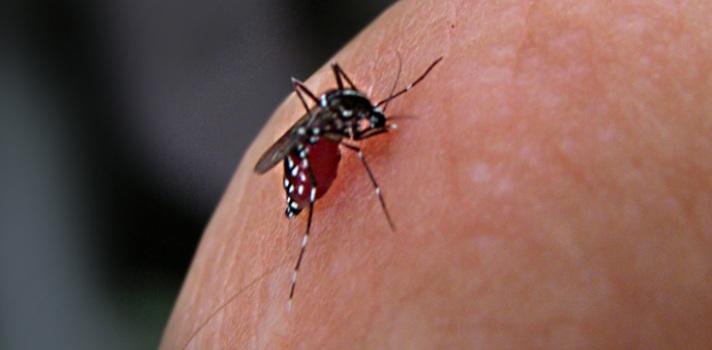 El MINSA y la UP luchan juntos contra el dengue