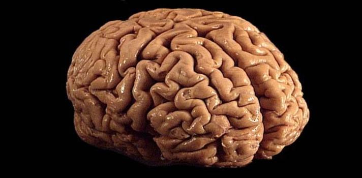 """<p style=text-align: justify;>El cerebro se está reduciendo porque nuestra biología se basa en la supervivencia y no en la inteligencia. Hoy en día tenemos cubiertas todas las necesidades, es decir, no precisamos de la creación de herramientas o el desarrollo del lenguaje. Esto hace que nuestra inteligencia sea """"menos necesaria"""". Pero, ¿qué es lo que hace que lo humanos sean cada vez más inteligentes?<br/><br/></p><p><span style=color: #ff0000;><strong>Lee también</strong></span><br/><a style=color: #666565; text-decoration: none; title=href=https://noticias.universia.com.ar/educacion/entrevista/2015/05/28/1125976/lejos-preocuparnos-dispositivo-inteligencia-artificial-tome-conciencia-propia-aseguro-claudio-verrastro.html>» <strong>Estamos muy pero muy lejos de preocuparnos por que un dispositivo de inteligencia artificial tome conciencia propia, aseguró Claudio Verrastro </strong></a><br/><a style=color: #666565; text-decoration: none; title=¿Trabajarías bajo las órdenes de un robot? href=https://noticias.universia.com.ar/empleo/noticia/2014/08/28/1110484/trabajarias-bajo-ordenes-robot.html>» <strong>¿Trabajarías bajo las órdenes de un robot?</strong></a><br/><a style=color: #666565; text-decoration: none; title=Argentinos crean un robot que toma decisiones href=https://noticias.universia.com.ar/en-portada/noticia/2012/03/14/917416/argentinos-crean-robot-toma-decisiones.html>» <strong>Argentinos crean un robot que toma decisiones</strong></a></p><p style=text-align: justify;><br/>Si bien durante los últimos dos millones de años, el cerebro ha crecido constantemente, desde hace unos 20.000 años que está menguando, a tal punto que los científicos predicen que si el cerebro sigue reduciéndose, en unos 2.000 años va a ser de similar tamaño que a los del <strong>Homo erectus.</strong></p><p style=text-align: justify;>Sin embargo, algo está evadiendo a la naturaleza y a su consecuente reducción del cerebro y sigue haciendo a las personas cada vez más y más inteligentes. ¿"""