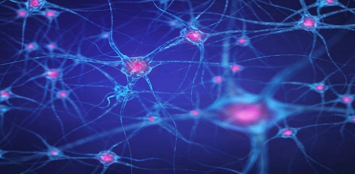 La inflamación del sistema nervioso puede deberse a la inflamación intestinal