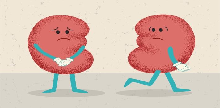 Día Mundial del Riñón: consejos para cuidar los riñones.