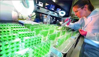 Nuevo programa de becas de la Fundación Bayer para estudiar en Alemania