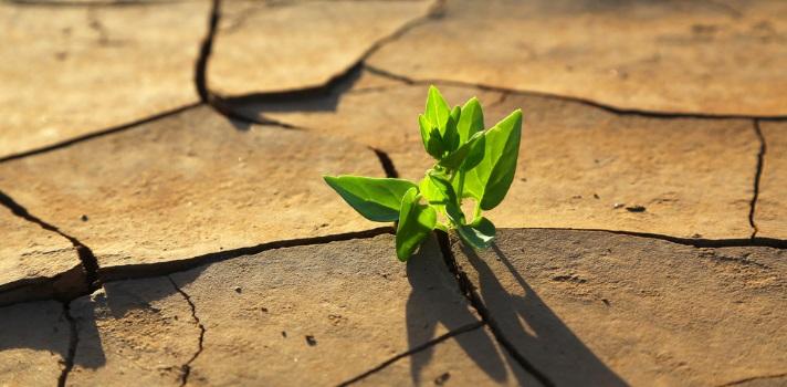 El cuidado del ambiente es responsabilidad de todos