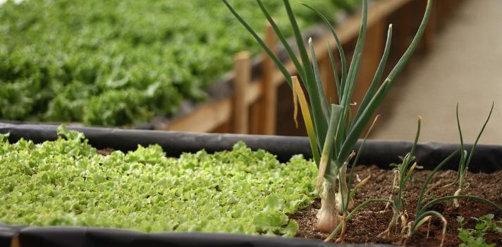 Bayer ofrece becas de hasta 50.000 dólares para financiar proyectos agrícolas