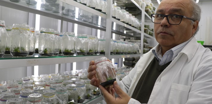 Descubren principio activo en plantas de la Antártica