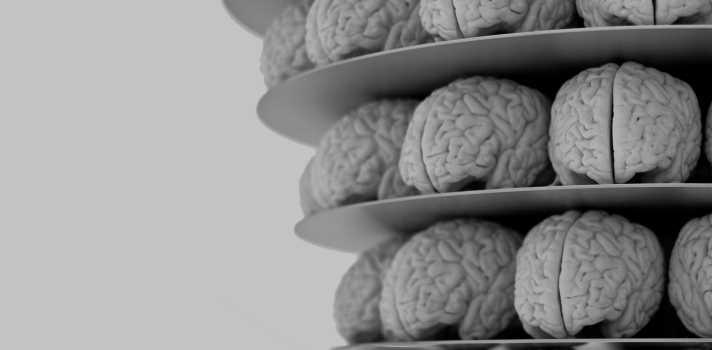 <p style=text-align: left;>Pese a los grandes avances científicos en su estudio, el cerebro, con sus <strong>86.000 millones de neuronas y 100 billones de conexiones</strong>, continúa siendo el misterio más complejo para el ser humano. A través de la nanotecnología y su aplicación en la salud es que se han producido grandes innovaciones, pero para ello es fundamental la participación de los emprendedores.</p><p style=text-align: left;><strong>Curar las enfermedades y lesiones cerebrales</strong></p><p style=text-align: left;>La búsqueda de explicaciones y de comprensión del cerebro tiene un propósito puramente científico de comprender cómo funciona, pero también un segundo, que es encontrar la cura a los trastornos y enfermedades ocasionadas en el cerebro.</p><p style=text-align: left;>El costo de los trastornos cerebrales supone un gasto mundial anual de 2.5 billones de dólares, y se estima que escalará notoriamente en los próximos años, asegura el Dr. Kunal Ghosh, director de la empresa <strong><a title=Portal de Inscopix href=https://www.inscopix.com/ target=_blank>Inscopix</a></strong>de investigación en neurociencia, quién además reprocha el hecho de que el desarrollo de las terapias en el área han permanecido estáticas en los últimos 20 años, donde <strong>el 66% de todas las moléculas que ingresan la fase 3 de ensayos clínicos de drogas neuronales fracasan</strong>.</p><p style=text-align: left;>El profesor de la <strong><a title=Portal de Estudios Internacionales de Universia - Universidad Carnegie Mellon href=https://internacional.universia.net/eeuu/unis/pennsylvania/cmu/descripcion.htm>Universidad Carnegie Mellon</a></strong>, Estados Unidos, sostiene además que a pesar de los grandes esfuerzos producidos para combatir el Alzheimer, <strong>hasta la fecha no existe una sola droga capaz de revertir los síntomas de la enfermedad</strong>, mucho menos curarla, lo que resulta especialmente preocupante a medida que las poblaciones envejecen, explicó en el <str