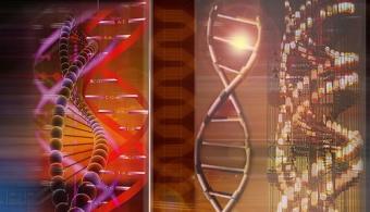 <p style=text-align: justify;>Quizás <strong>todo nuestro ADN no sea humano</strong>, algo contrario de lo que se venía creyendo hasta ahora. Al parecer la ciencia descubrió que cada organismo posee 145 genes externos que proceden de otras criaturas y han transferido su material genético al nuestro.</p><p></p><p><strong>Lee también</strong></p><p><span style=color: #0000ff;><a style=color: #ff0000; text-decoration: none; title=Sigue toda la actualidad universitaria a través de nuestra página de FACEBOOK href=https://www.facebook.com/pages/Universia-Andorra/321360841290005><span style=color: #0000ff;>» <strong>Sigue toda la actualidad universitaria a través de nuestra página de FACEBOOK</strong></span></a></span></p><p><span style=color: #ff0000;><a style=color: #ff0000; text-decoration: none; title=Visita nuestro Portal de BECAS y descubre las convocatorias vigentes href=https://becas.universia.net/ad/index.jsp><span style=color: #ff0000;>» <strong>Visita nuestro Portal de BECAS y descubre las convocatorias vigentes</strong></span></a></span></p><p style=text-align: justify;></p><p style=text-align: justify;>Investigadores de la <strong><span style=text-decoration: underline;><span style=color: #0000ff;><a title=Universidad de Cambridge href=https://estudios-internacionales.universia.net/uk/universidades/CAM/index.html target=_blank><span style=color: #0000ff; text-decoration: underline;>Universidad de Cambridge</span></a></span></span></strong>comenzaron a analizar secuencias genómicas de cuarenta especies muy distintas entre sí, que van desde moscas de la fruta a cebras, gorilas y humanos. ¿cCuál fue la conclusión? Que el ser humano posee 145 genes externos a su genoma</p><p style=text-align: justify;></p><p style=text-align: justify;>La afirmación por la que los científicos de Cambridge aseguran que no somos 100% humanos se debe a que <strong>poseemos 145 genes externos a nuestro genoma, que proceden de bacterias, virus y otros microorganismos</strong> que han lo