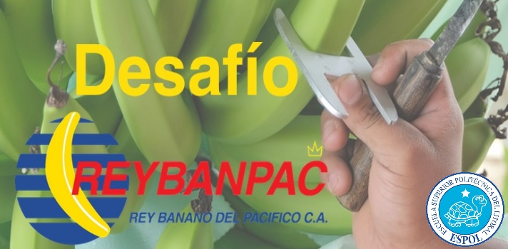El Rector de la <a href=https://www.universia.com.ec/universidades/escuela-superior-politecnica-litoral/in/36817 target=_blank>ESPOL</a>, <strong>Sergio Flores Macías</strong> y el gerente general de<strong> Reybanpac S.A. Favorita Fruit Company</strong>, <strong>Álvaro Acevedo</strong> establecieron la pasada semana una alianza estratégica para llevar acabo el concurso <strong>Desafío Reybanpac</strong>que, apoyado por la particpiación del <strong>CEEMP, Centro de Emprendedores de la ESPOL</strong>, impulsa la participación de jóvenes de todas las universidades ecuatorianas. <br/><br/><br/>El Desafío Reybanpac busca que los universitarios puedan utilizar sus habilidades y talento para <strong>favorecer el desarrollo del sector productivo</strong>. Dirigido a<strong> estudiantes de pregrado y posgrado</strong><strong>de todas las universidades del país</strong>, el reto promueve que a través de estrategias innovadoras los jóvenes brinden soluciones y alternativas de mejora para los procesos de producción vinculados al<strong> monitoreo y cosecha de banano</strong>. <br/><br/><br/>Los equipos que participen contarán con <strong>un máximo 5 integrantes</strong> que podrán pertenecer a distintas disciplinas y también será válida la participación de<strong> profesores titulares u ocasionales</strong> que se encuentren activos al momento del concurso.<br/><br/><br/>Luego de cerradas las inscripciones se llevará a cabo un taller donde se responderán las preguntas sobre el problema planteado y posteriormente se presentarán las propuestas, que serán evaluadas por un jurado a fin de <strong>seleccionar tres equipos</strong>. Los equipos finalistas viajarán hasta la hacienda bananera para <strong>verificar la situación que debe ser mejorada</strong> en la cosecha del banano.<br/><br/><br/>Finalmente los equipos presentarán las propuestas finales incluyendo <strong>diseños, presupuesto y proceso de construcción</strong> para, como último paso, <strong>realizar una presentación