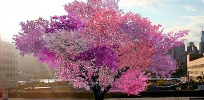 Nunca te imaginarás qué fruto proviene de este árbol
