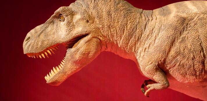 Una de las principales salidas laborales de la Paleontología es la investigación en laboratorios y yacimientos