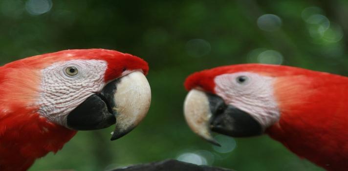 México podría perder más de 2.500 especies