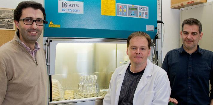 Investigadores da UA publicam descoberta de estruturas calcárias formadas por microalgas de corais na PNAS