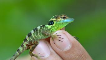 La biodiversidad más rica del Caribe está en peligro de extinción