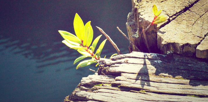 5 documentales que nos ayudan a reflexionar en el Día Mundial del Medio Ambiente