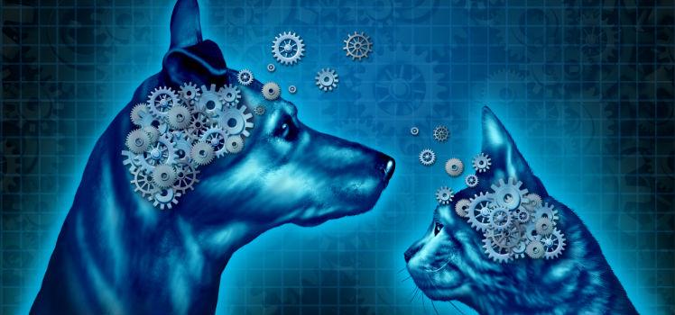 La IA ofrece nuevos métodos para interpretar y estudiar las redes neuronales