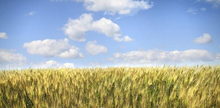 Cada vez son más los poryectos de investigación que se centran en producciones sostenibles y respetuosas con los recursos naturales