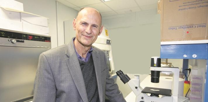 Consiguen generar tejidos y órganos en animales a partir de células pluripotentes