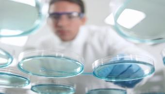Incorporación de nanopartículas a envases extendería vida útil de los alimentos