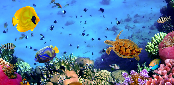 Seaseeker: las gafas que permiten filmar bajo el agua.