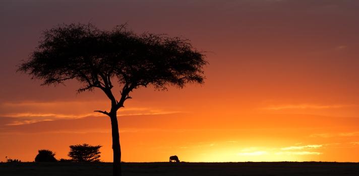 Día Mundial de la Vida Silvestre: una fecha para celebrar la flora y fauna