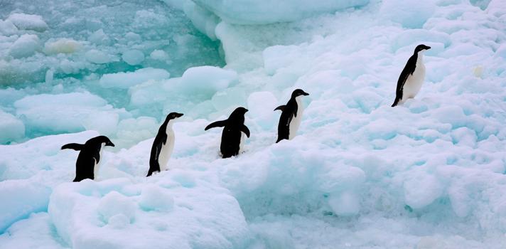 La marcha más triste de los pingüinos