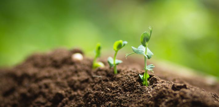 Tener un planeta más verde y sano depende de la acción de todos
