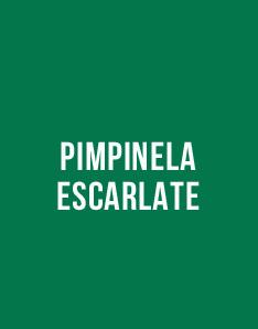 Livro grátis - Pimpinela Escarlate, de Emma Orczy