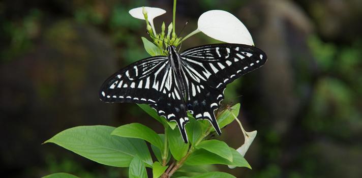 UNAL: Sede Medellín lanza versión virtual de su museo de insectos