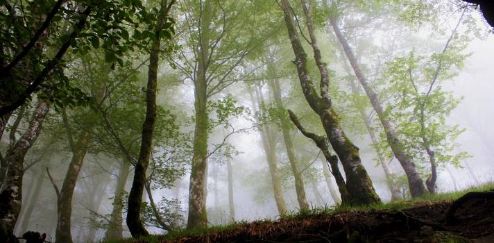 España cuenta con un clima y orografía perfectos para realizar una transformación verde exitosa