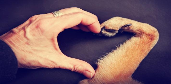 Descubre por qué el perro es el mejor amigo del hombre.