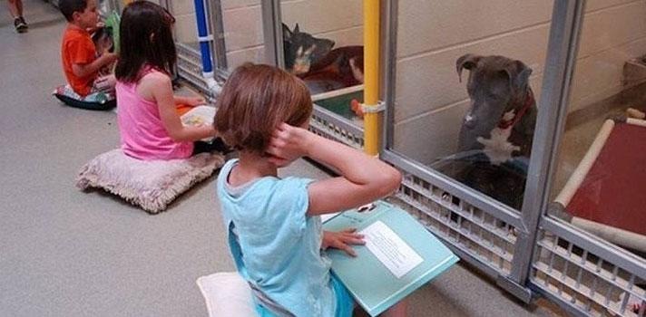 Projeto recruta crianças para lerem para cães em abrigos