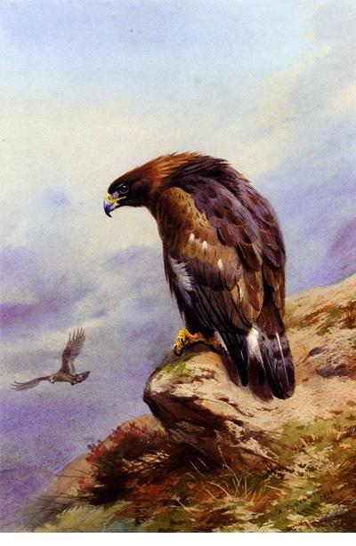 uma-aguia-dourada-archibald-thorburn