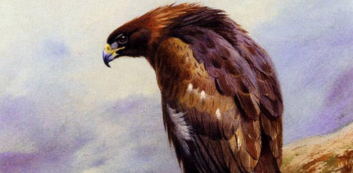 Arte do Dia: Uma Águia Dourada de Archibald Thorburn