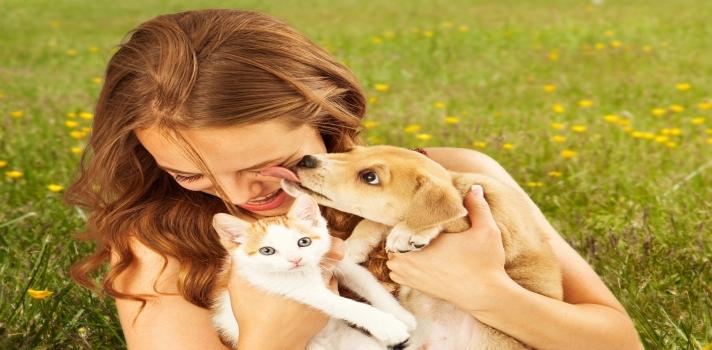 """<p>Numerosos estudios han detectado que <strong>los animales domésticos</strong> (principalmente perros y gatos) poseen """"<strong>propiedades medicinales</strong>"""" que ayudan al desarrollo del sistema inmunológico y reducen el riesgo de enfermedades.</p><div class=help-message><h4>¿Te interesa estudiar Veterinaria?</h4><a href=https://www.universia.edu.pe/estudios/veterinaria/dp/710 class=enlaces_med_leads_formacion button01 title=Estudia Veterinaria target=_blank id=ESTUDIOS>Más info</a></div><p>Tener animales <strong>mejora el ánimo de las personas y hace que adoptes algunos hábitos saludables,</strong> como por ejemplo salir a caminar. Además, son de gran ayuda para aquellas personas que padecen trastorno de bipolaridad, estrés postraumático, depresión o ansiedad.</p><p>No cabe duda de que los animales domésticos son una gran compañía para las personas porque además de <strong>crear un fuerte vínculo afectivo</strong>, también <strong>ocupan un lugar fundamental como miembros de una familia</strong>.</p><p>La mayoría de las personas desconocen los extraordinarios beneficios que producen los animales en su vida. Seguramente si tienes o has tenido animales domésticos sabes que mejoran considerablemente nuestra calidad de vida; pero si aún desconoces los beneficios de tener una mascota en casa, te damos a conocer todas las ventajas para que tengas uno o más motivos hacerlo.</p><p><strong>Gatos</strong></p><p>Los gatos son las mascotas más graciosas por sus peculiares costumbres, sus ilógicas manías y su <strong>intrigante personalidad</strong>. En ocasiones pueden ser muy independientes y distantes, pero en general son sumamente cariñosos.</p><p>El cerebro de los gatos tiene 300 millones de neuronas y poseen un importante plegamiento superficial, asemejándose en un 90% al cerebro humano, que incrementa considerablemente su capacidad cognitiva.</p><p>Son <strong>animales muy limpios</strong>, pues se ha determinado que estos felinos <strong>pasan entre el 30% y el 50%"""