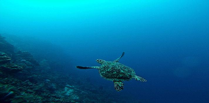 Enfoca tus estudias a la conservación del medio marino y la protección de especies