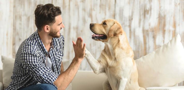 ¿Quieres ser educador canino? No te pierdas estos cursos
