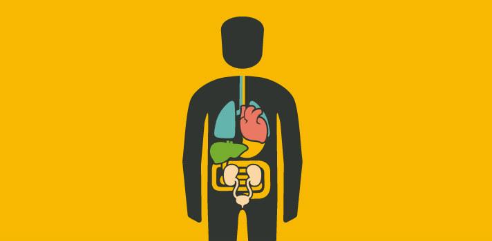 5 aplicativos para explicar o corpo humano