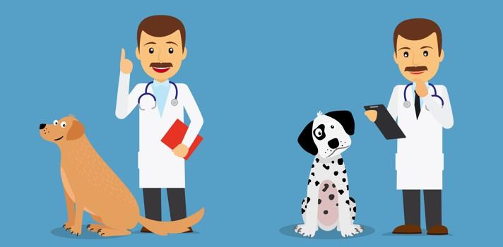 Veterinaria es una carrera muy vocacional e ideal para los amantes de los animales