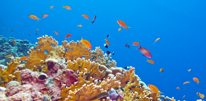 Proponen 5 ciudades submarinas para convertirlas en Patrimonio Mundial de Alta Mar