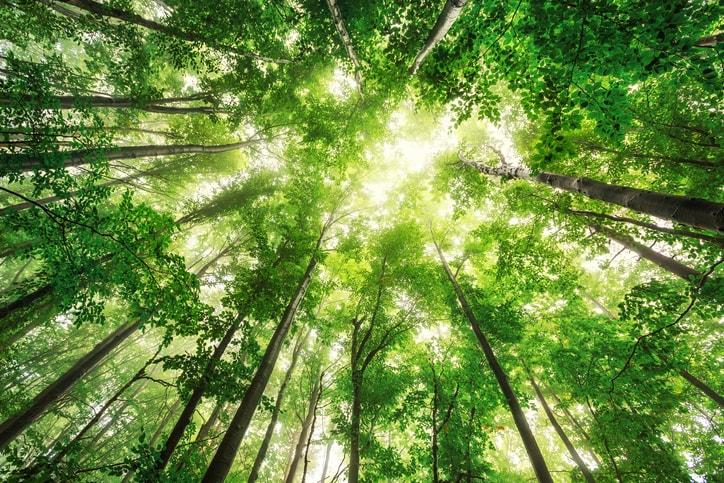Carrera medio ambiente: ¿qué opciones tienes?