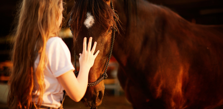 ¿Te gustaría cuidar caballos? No te pierdas estos cursos