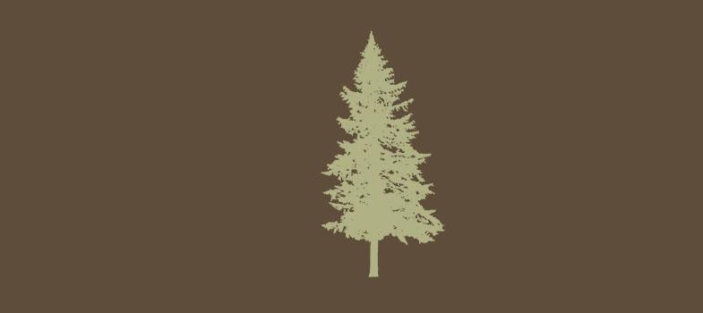 Por que estudar Engenharia Florestal