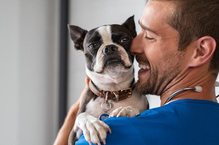 Medicina veterinaria y zootecnia: todo lo que debes saber, aquí