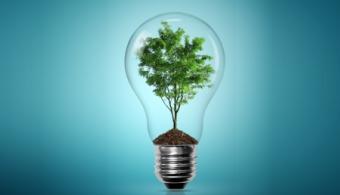 5 mitos acerca del cuidado del medio ambiente