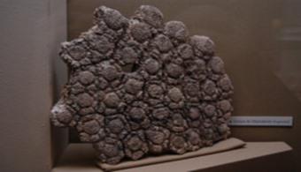 """<p style=text-align: justify;>Un grupo de ciudadanos de Río Tercero encontaron aorillas del cauce del Río Xanaes <strong>restos de un gliptodonte</strong>en muy buen estado.En el lugar están trabajando Carlos Luna, técnico en paleontología y un equipo de trabajo para lograr trasladar este mamífero sin que sufra ningún daño.</p><p style=text-align: justify;></p><p><strong>Lee también</strong><br/><a style=color: #ff0000; text-decoration: none; title=El argentinosaurio es el dinosaurio más grande de la historia href=https://noticias.universia.com.ar/ciencia-nn-tt/noticia/2014/05/09/1096252/argentinosaurio-dinosaurio-grande-historia.html>» <strong>El argentinosaurio es el dinosaurio más grande de la historia</strong></a><br/><a style=color: #ff0000; text-decoration: none; title=¿Cómo eran los dinosaurios Dreadnoughtus? href=https://noticias.universia.com.ar/ciencia-nn-tt/noticia/2014/09/08/1111072/como-dinosaurios-dreadnoughtus.html>» <strong>¿Cómo eran los dinosaurios Dreadnoughtus?</strong></a></p><p style=text-align: justify;></p><h4>Sobre los Gliptodontes</h4><p style=text-align: justify;>Este animal, cuyo nombre hace referencia a<strong> """"diente ranurado""""</strong>, perteneció a la familia de los armadillos y su alimentación era vegetariana. La especie era nativa de América del Sur y medía aproximadamente 3 metros.</p><p style=text-align: justify;></p><p style=text-align: justify;>Pertenecía a los <strong>mamíferos placentarios """"Xenarthra</strong>"""", al igual que los osos hormigueros, perezosos y armadillos.</p><p style=text-align: justify;>Algunas de sus <strong>características principales </strong>eran:</p><p style=text-align: justify;></p><p style=text-align: justify;>- <strong>Caparazón</strong> rígido que variaba según la especie y que los ayudaba a refugiarse frente a la caza de los humanos.</p><p style=text-align: justify;></p><p style=text-align: justify;>- Tenía una cubierta blindada con secciones o cuernos de hueso entre la coraza y la cola. Esta área mues"""