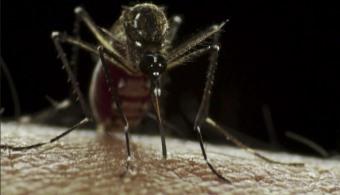 """<p style=text-align: justify;>La fiebre chikungunya es un <strong>virus que se trasmite a través de los mismos mosquitos que el dengue</strong> (Aedes aegypti y Aedes albopictus), que surgió en Tanzania en 1952 y el año pasado llegó a América. Actualmente se encontraron los principales brotes en República Dominicana, pero está presente en otros 29 países latinoamericanos, y además hay 540 mil casos de personas infectadas. En los últimos días<strong> se confirmaron 2 casos en la Argentina</strong>.</p><p style=text-align: justify;></p><p><strong>Lee también</strong><br/><a style=color: #ff0000; text-decoration: none; title=¿Por qué los mosquitos zumban sobre nuestras cabezas y nos pican mientras dormimos? href=https://noticias.universia.com.ar/ciencia-nn-tt/noticia/2014/01/23/1077252/que-mosquitos-zumban-nuestras-cabezas-nos-pican-mientras-dormimos.html>» <strong>¿Por qué los mosquitos zumban sobre nuestras cabezas y nos pican mientras dormimos?</strong></a></p><p style=text-align: justify;></p><p style=text-align: justify;></p><p style=text-align: justify;>Su nombre (""""chikungunya"""") significa doblarse en el idioma local Kimakonde, y hace referencia al <strong>aspecto encorvado de los que padecen el virus</strong>a consecuencia de los dolores articulares.</p><p style=text-align: justify;></p><h4 style=text-align: justify;>¿Cuáles son los síntomas?</h4><p style=text-align: justify;>Los principales síntomas son: <strong>dolor articular, dolor abdominal, vómitos, fiebre súbita, inflamación de las articulaciones y erupción de la piel</strong>.</p><p style=text-align: justify;></p><h4 style=text-align: justify;>¿Cuál es la diferencia con el dengue?</h4><p style=text-align: justify;>El dengue y la fiebre chikungunya inicialmente tienen síntomas similares, por lo que pueden llegar a confundirse. De todos modos, en la segunda etapa de la fiebre aparecen los<strong> dolores articulares extremadamente intensos e invalidantes</strong>, que pueden persistir por algunos meses.</p>"""