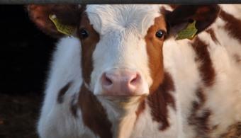 """<p style=text-align: justify;>El <strong><a title=Instituto de Promoción de la Carne Vacuna Argentina (IPCVA) href=https://www.ipcva.com.ar/ target=_blank>Instituto de Promoción de la Carne Vacuna Argentina (IPCVA)</a></strong>lanzó el llamado <strong>VI Compulsa Técnica para Proyectos de Investigación""""</strong>, que tiene como principal objetivo motivar y apoyar la investigación científico-tecnológica coordinada que reclute esfuerzos y recursos para la solución de problemas puntuales y el aprovechamiento de oportunidades en este sector.</p><p style=text-align: justify;></p><p style=text-align: justify;><strong>Lee también</strong><br/><a title=Portal de Becas - Universia href=https://becas.universia.com.ar/AR/index.jsp>»<strong>Visitá nuestro portal de becas y conocé todas las becas vigentes</strong></a></p><p style=text-align: justify;></p><p style=text-align: justify;></p><p style=text-align: justify;></p><p style=text-align: justify;>El llamado busca trabajar con rigor científico y excelencia académica los siguientes <strong>asuntos considerados de creciente interés estratégico</strong>:</p><p style=text-align: justify;></p><p style=text-align: justify;>1- <strong>Condiciones de acceso comercial</strong> de la Argentina a los principales mercados importadores (UE, EEUU, Canadá, Japón, Rusia, Corea del Sur, Vietnam y China).</p><p style=text-align: justify;></p><p style=text-align: justify;>Análisis comparativo respecto a las condiciones de acceso de Australia, EEUU, Canadá, México, Uruguay, Unión Europea, Brasil y Nueva Zelanda.</p><p style=text-align: justify;></p><p style=text-align: justify;>2- <strong>Condiciones de acceso sanitario</strong> de la Argentina a los principales mercados importadores (Unión Europea, EEUU, Canadá, Japón, Rusia, Corea del Sur, Vietnam y China).</p><p style=text-align: justify;></p><p style=text-align: justify;>Análisis comparativo respecto a las <strong>condiciones de acceso</strong> de Australia, EEUU, Canadá, México, Uruguay, UE"""